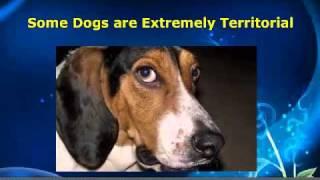 Dog Barking - Why Do They Do It?