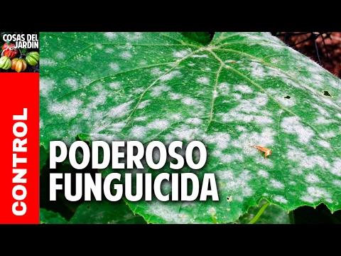 mejor insecticida hormigas