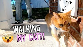 Cat Walks On Leash For The First Time!! (Warning: Cute)