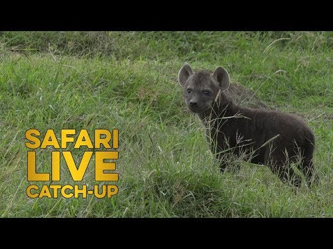 Mara Moment: Newest North Clan Cub