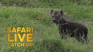 Mara Moment: Newest North Clan Cub