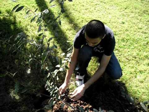 prepa mochis 3-13 filosofia planta un arbol cota solis mario edgardo