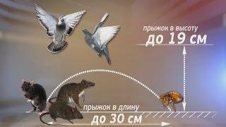 Блохи кусают детей. Новости. GuberniaTV(Детскую поликлинику в Хабаровске атаковали блохи. Посетители медучреждения уже несколько дней жалуются..., 2014-06-24T08:38:41.000Z)