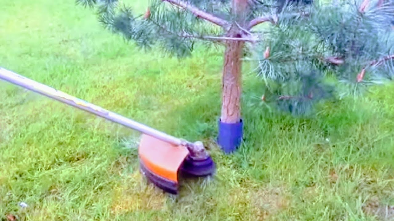 HOW TO CUT GRASS AROUND TREES WITHOUT HITTING BARK | BRUSH ...