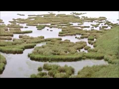 Λίμνη Προκοπίου - Δάσος Στροφυλιάς, Αχαΐα / Lake Prokopiou - Strofilia Forest Greece