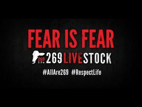 269 Live Stock