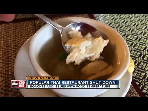 Dirty Dining: Thai Cuisine shut down twice in March for 'too many roaches to count' in the kitchen