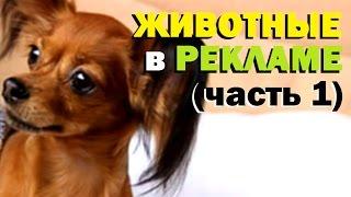 Галилео. Животные в рекламе (часть 1)(943 от 28.06.2012 Программа