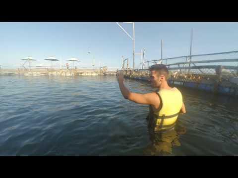 incredibile cosa fa il delfino