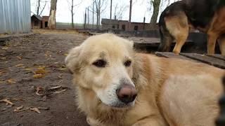 Schronisko dla bezdomnych zwierząt w Inowrocławiu-jesień 2018