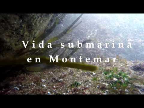 Biología Marina- Chile (Marine Biology)