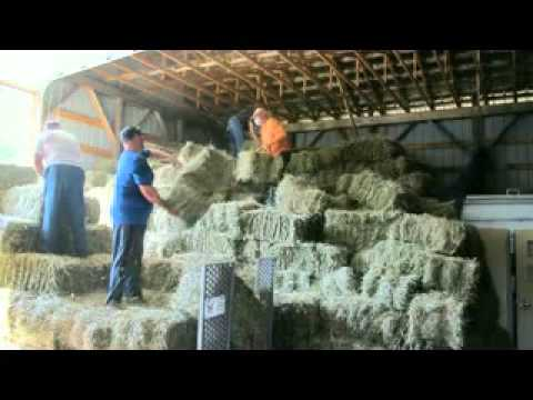 Making Hay with the Legers 2012
