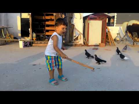 Güvercin besleme taklacı dönek paçalı azman güvercin uçurma Pigeon varieties