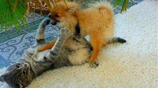 Кот и собака. Что то пошло не так. Кто там мяукает?