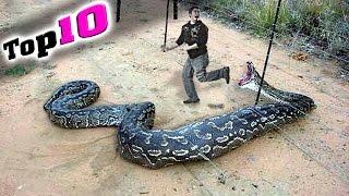 10 EXTREME Mensch - Tier Begegnungen auf Kamera aufgenommen