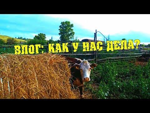 Влог. Животные, огород, театр теней...// Семья Фетистовых