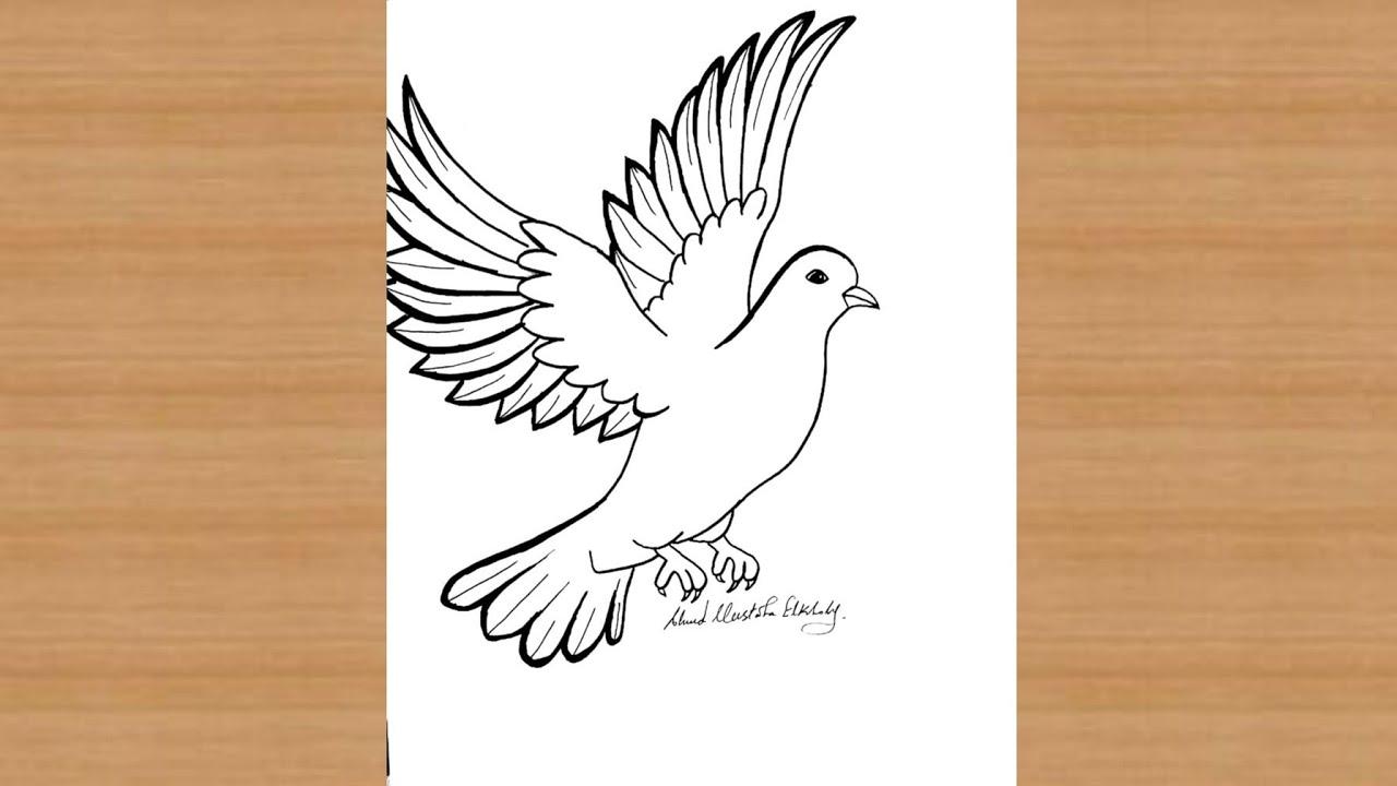 رسم حمامه جميله خطوه بخطوه عنوان السلام Youtube