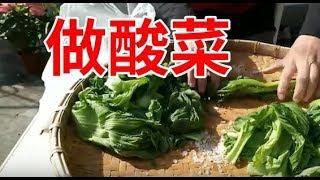 (阿美美)採芥菜做酸菜 完成了