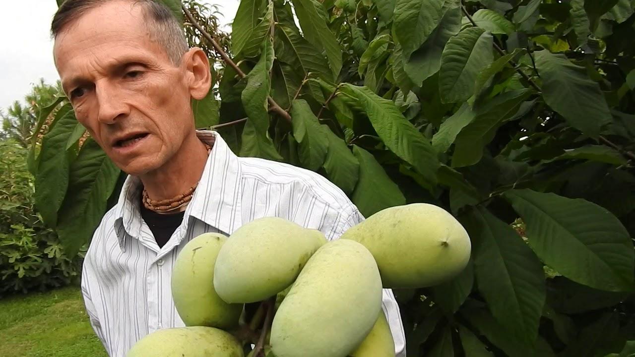 mangó a férgektől paraziták és férgek megelőzése és kezelése