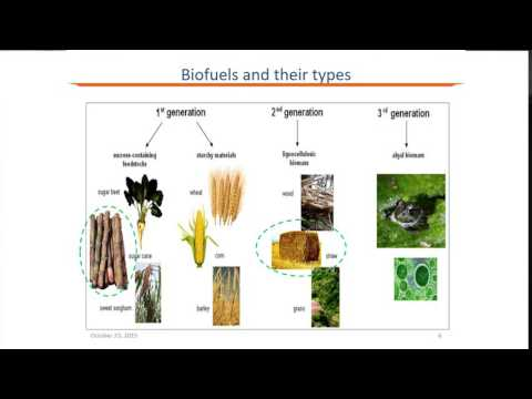 Life Cycle Assessment of Biofuels in India and its Impact on Indian Biofuel Programme - Shveta Soam