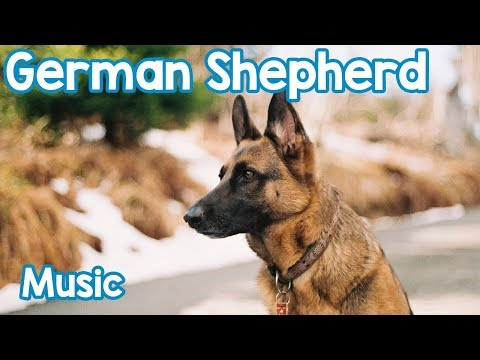 Relaxing Music for German Shepherds! Relax Your Dog!