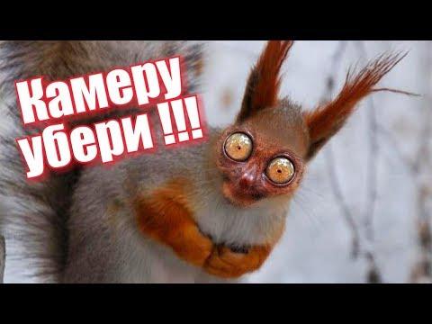 Белка напала на человека в Ялте. Крым. FUNNY ANIMALS Try not to LAUGH