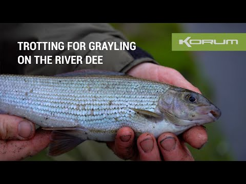 Grayling On The Float - River Dee