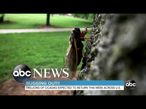Tennessee Hunter Finds Cicada Surprise Inside Freshly-Harvested Turkey