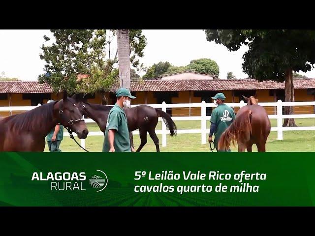5º Leilão Vale Rico oferta cavalos quarto de milha