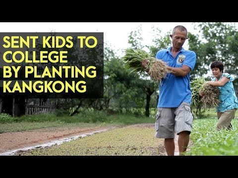 Chinese Kangkong: Sent their kids to college by planting Chi