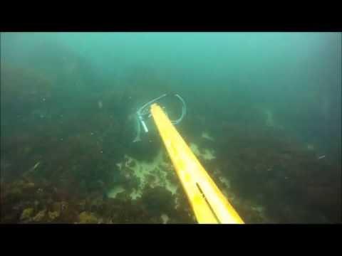 Killshot On Shark With Tbar Speargun