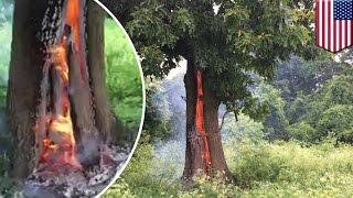 直擊!大樹遭雷劈 起火燃燒