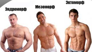 Типы телосложения Тестостероновый Адреналиновый Инсулиновый  типы