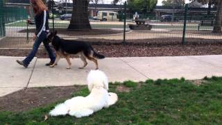 Cobe Dog Aggression Training Lhdt