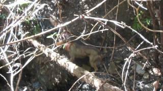 宮崎県北での猪単独猟です。 今回は罠師の方が応援に来ました。 止めさ...