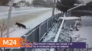 Мужчина расстрелял собаку на глазах у ее хозяйки - Москва 24