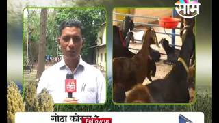 Guidance for protecting goat farming in India