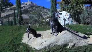 Dog Training For Aggressive Dogs San Diego