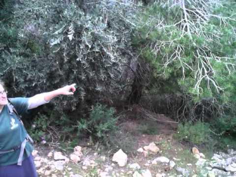 """Tour guide Aliza on """"shvil Hadassah"""" Ein Karem"""