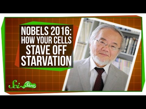 Nobels 2016: How Your Cells Stave Off Starvation