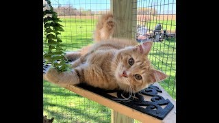 Building a Catio and Catio design ideas.