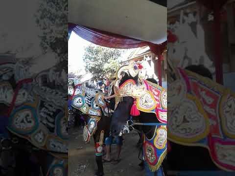 Kuda Renggong Sukbir