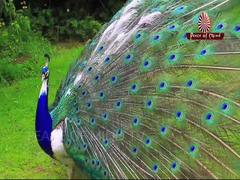 Yun Khatir Mere Tum Jo | Song | Brahma Kumaris | Peace of Mind TV Songs