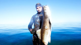 GIANT COBIA CATCH AND COOK The Sammy & Dman Show (Cooking Challenge) - Ep 131