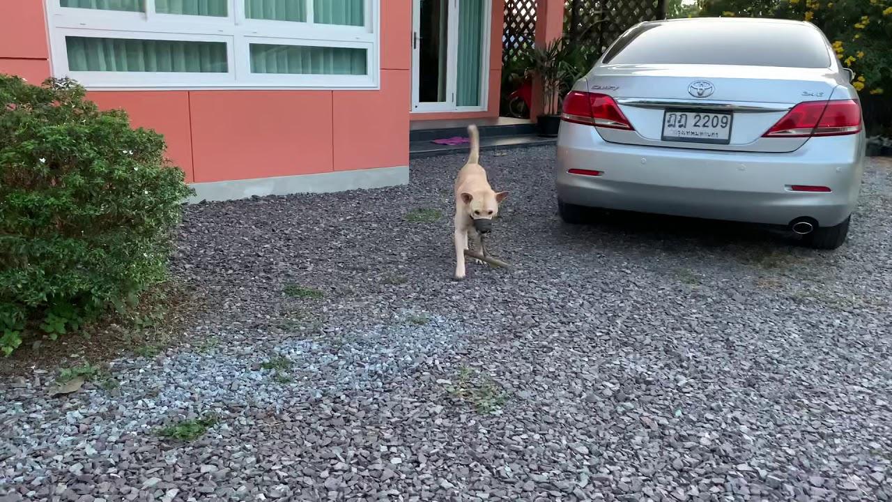 วิธีป้องกันหมาวิ่งไล่ขับ