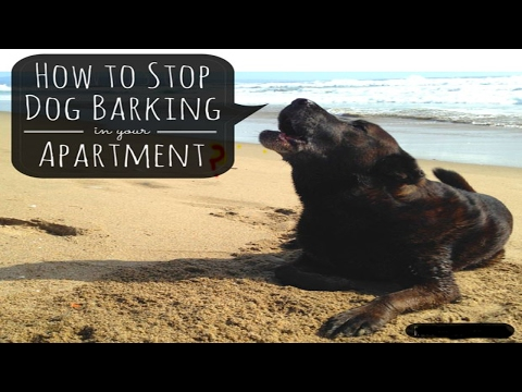 how-to-stop-a-dog-barking-|-how-to-stop-a-dog-barking-at-night