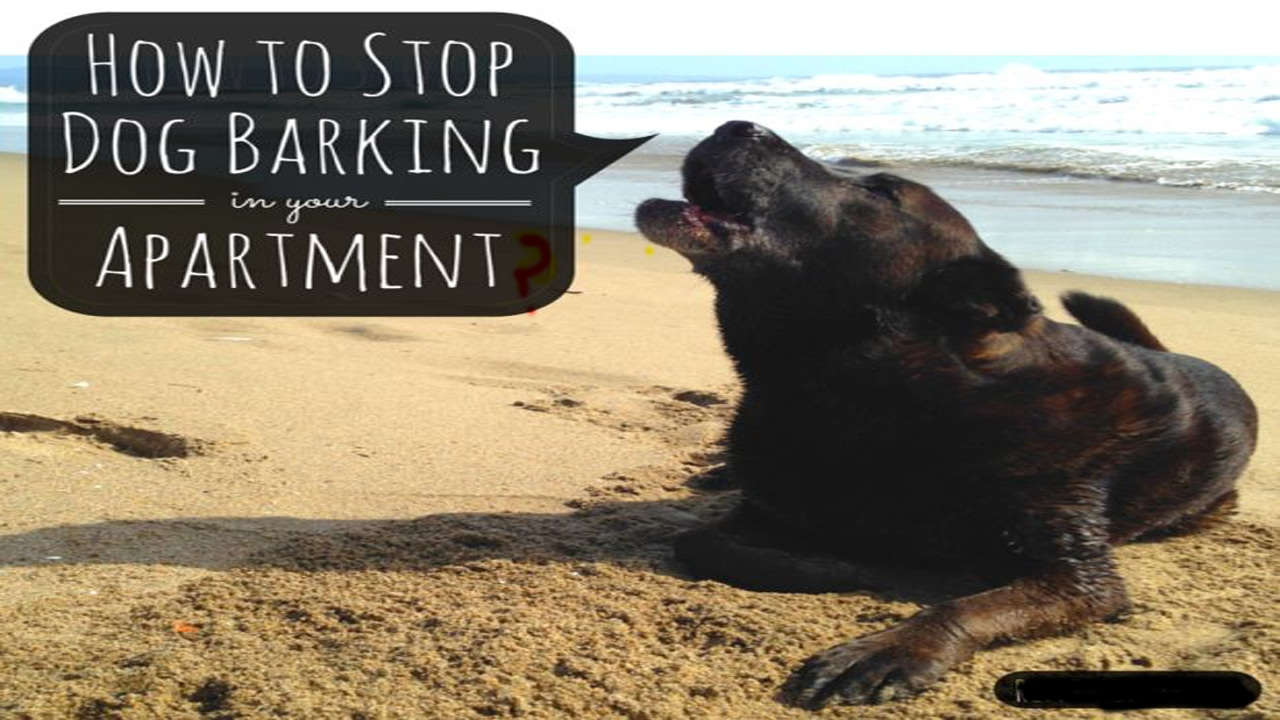 how to train a dog to stop barking at night
