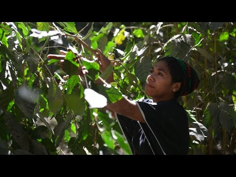 Timor-Leste: A Safer Highway Means a Better Cup of Coffee
