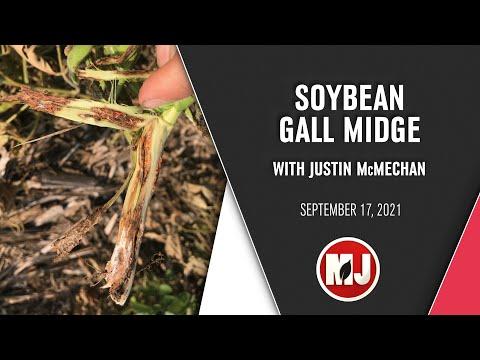 Soybean Gall Midge | Justin McMechan | September 17, 2021