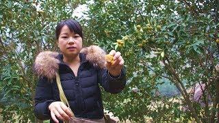 农村姑娘摘的这水果我们当宝贝买,当地的果农却把它当垃圾丢了
